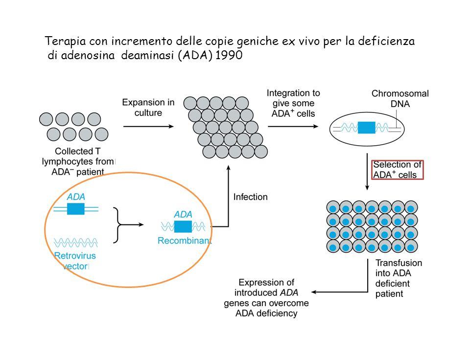 Terapia con incremento delle copie geniche ex vivo per la deficienza