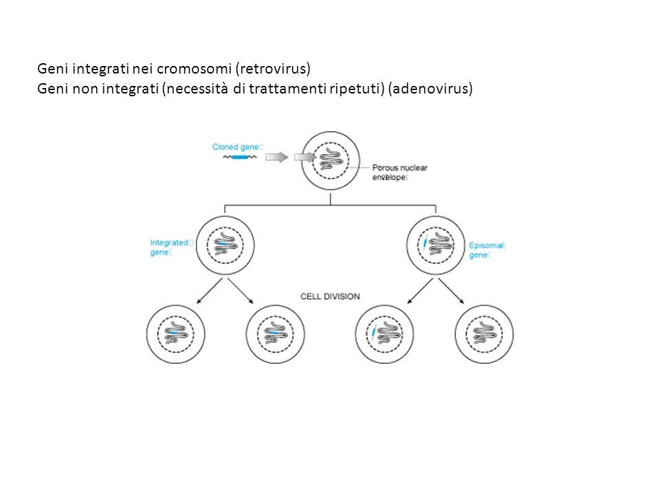 Geni integrati nei cromosomi (retrovirus)