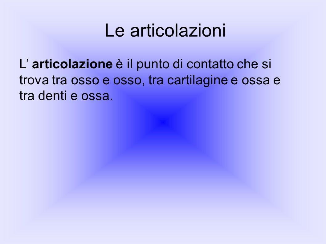 Le articolazioni L' articolazione è il punto di contatto che si trova tra osso e osso, tra cartilagine e ossa e tra denti e ossa.