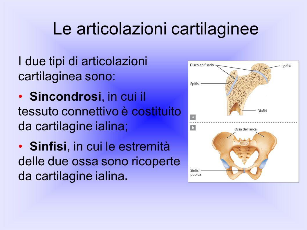 Le articolazioni cartilaginee