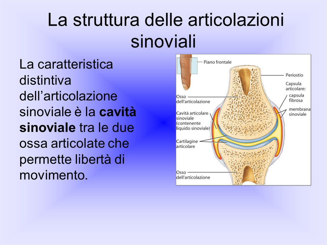 La struttura delle articolazioni sinoviali