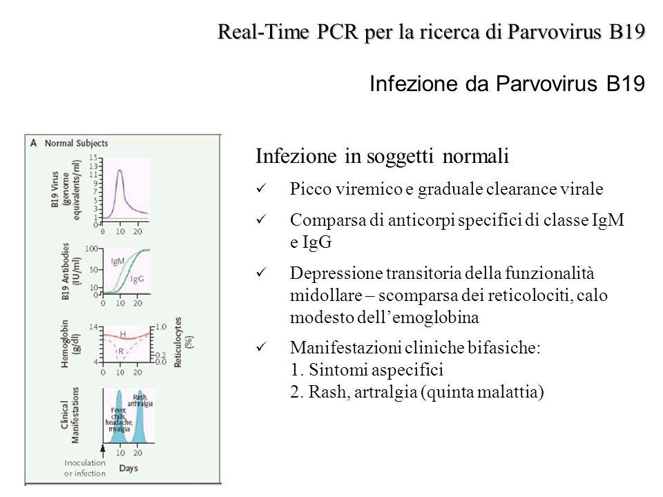Real-Time PCR per la ricerca di Parvovirus B19