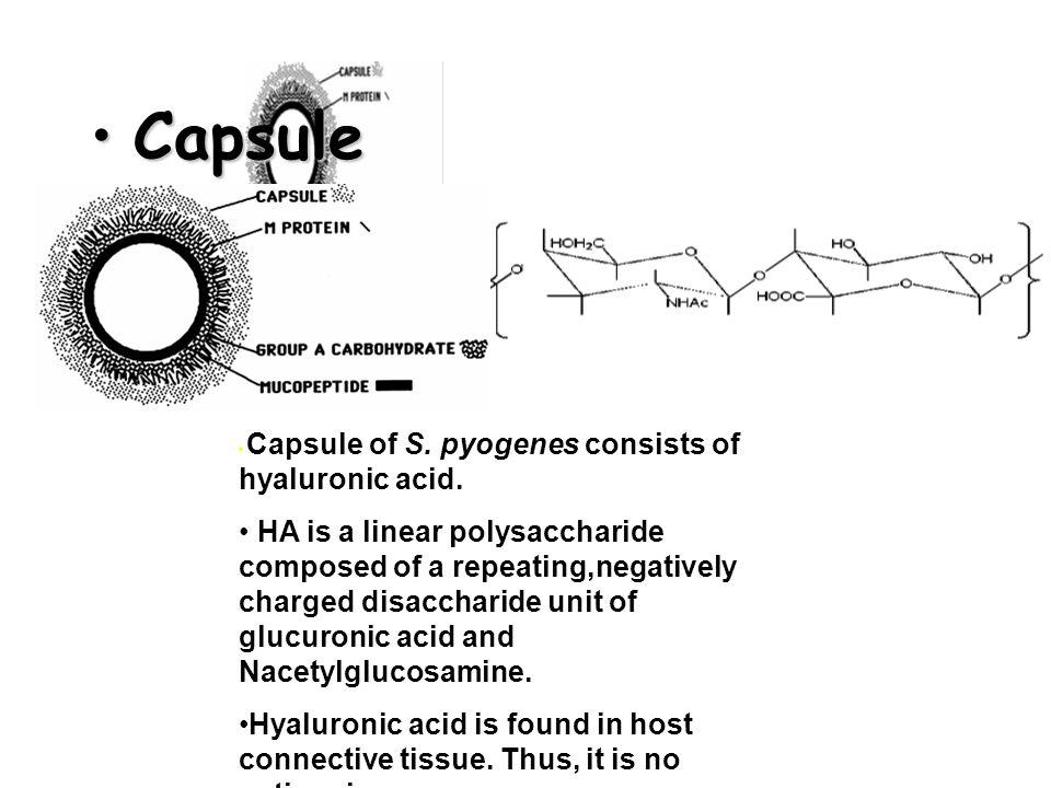 • Capsule • Capsule of S. pyogenes consists of hyaluronic acid.