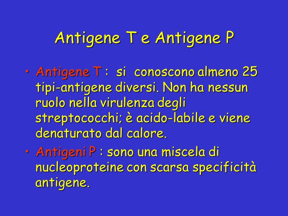 Antigene T e Antigene P