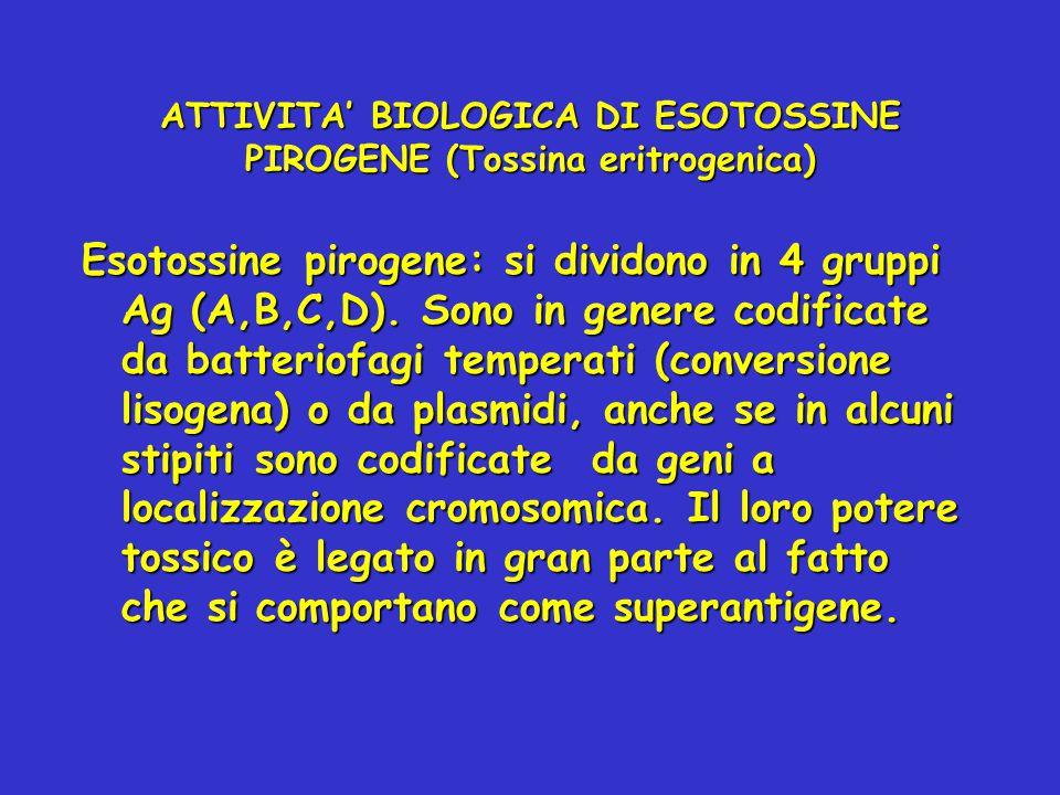 ATTIVITA' BIOLOGICA DI ESOTOSSINE PIROGENE (Tossina eritrogenica)