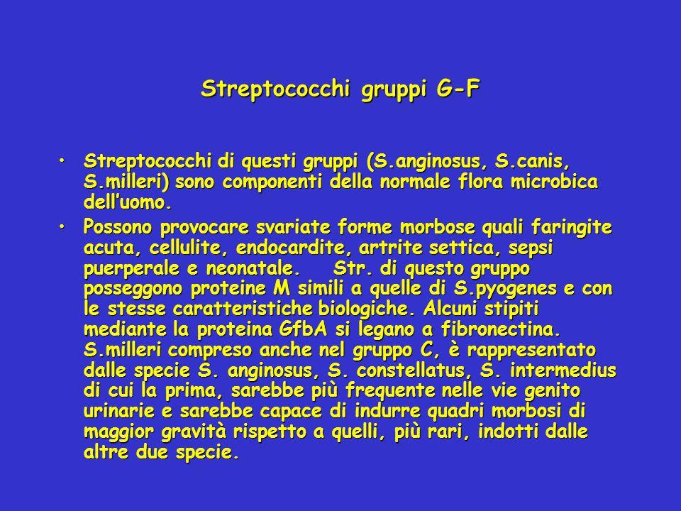 Streptococchi gruppi G-F