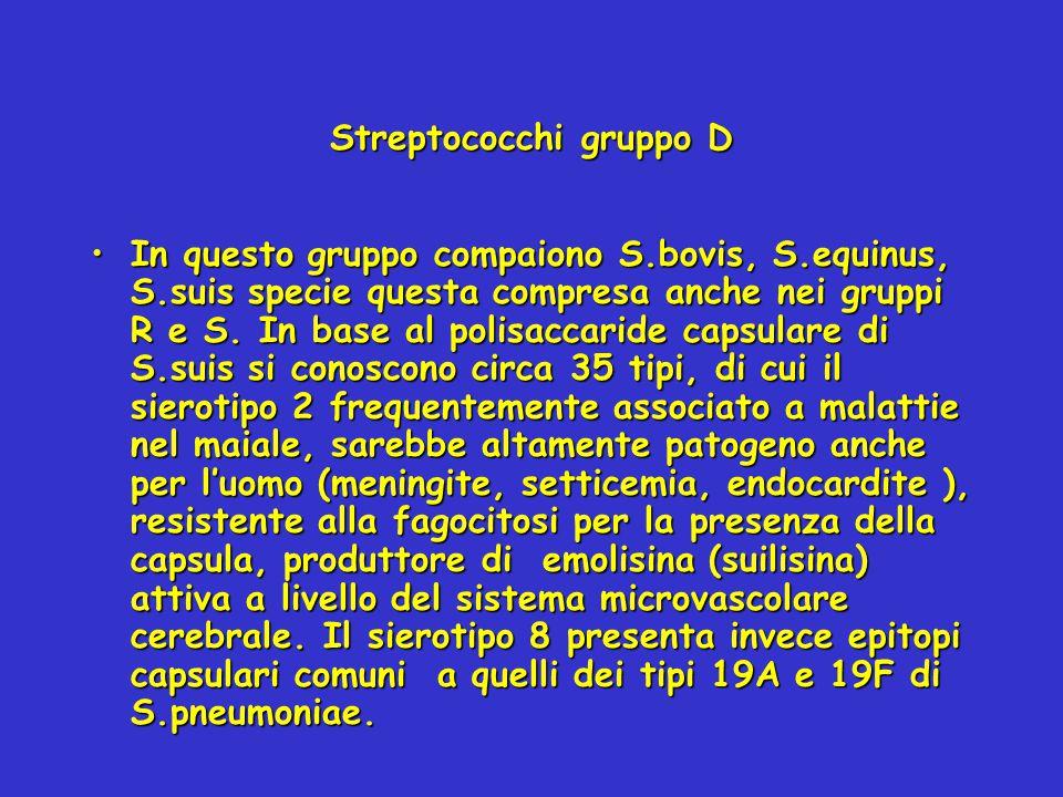 Streptococchi gruppo D