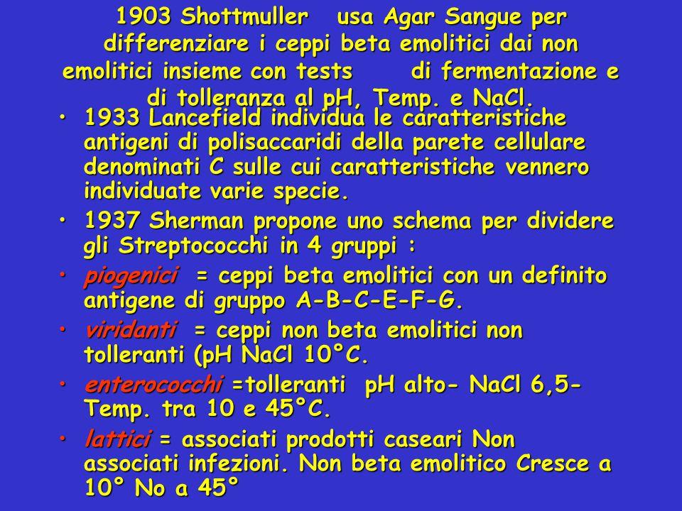 1903 Shottmuller usa Agar Sangue per differenziare i ceppi beta emolitici dai non emolitici insieme con tests di fermentazione e di tolleranza al pH, Temp. e NaCl.