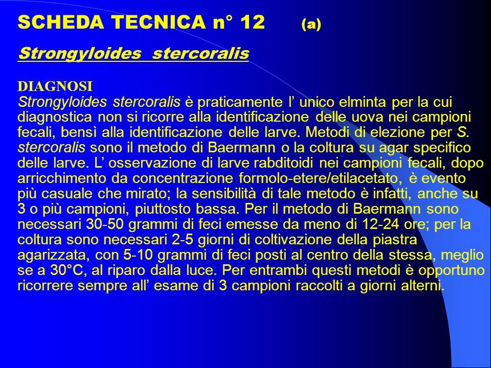 SCHEDA TECNICA n° 12 (a) Strongyloides stercoralis DIAGNOSI