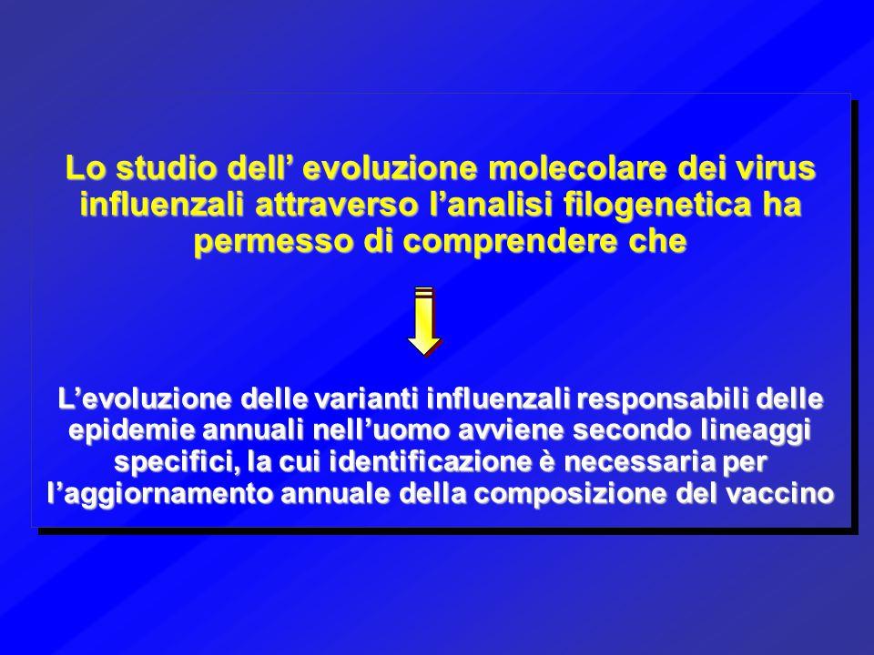 Lo studio dell' evoluzione molecolare dei virus influenzali attraverso l'analisi filogenetica ha permesso di comprendere che