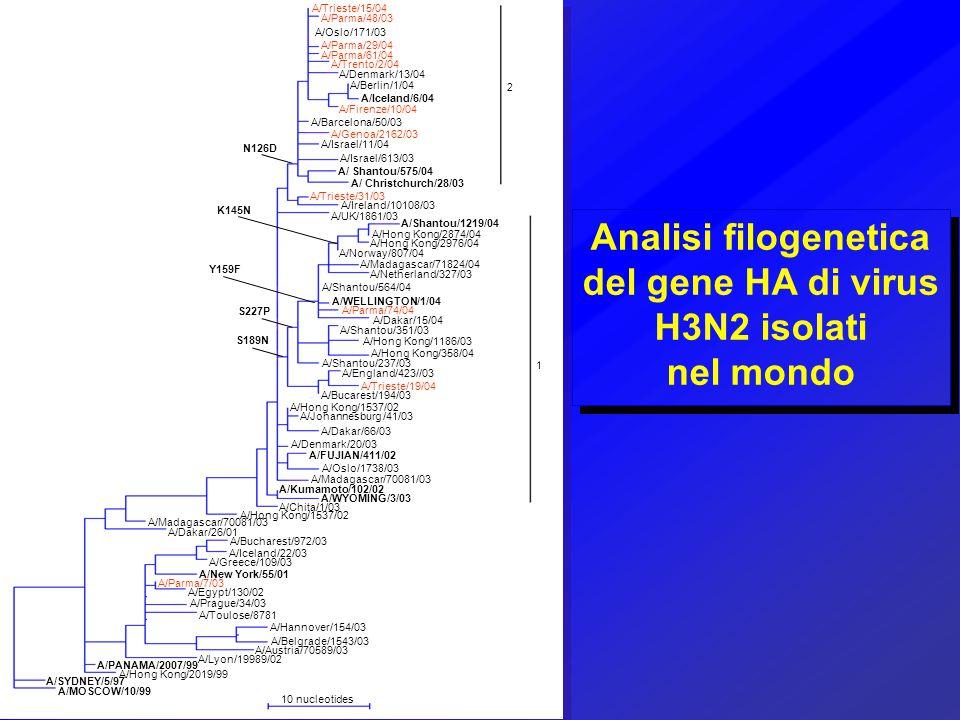 Analisi filogenetica del gene HA di virus H3N2 isolati
