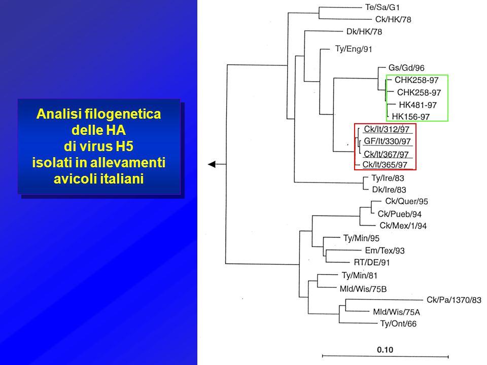Analisi filogenetica delle HA di virus H5 isolati in allevamenti avicoli italiani
