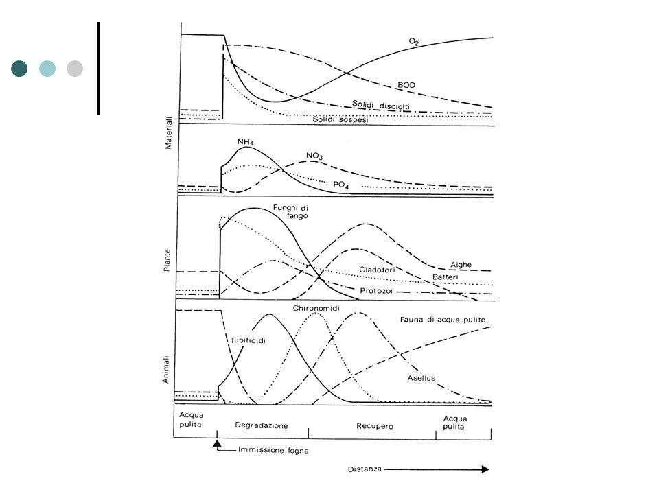L'ossigeno disciolto non è, ovviamente, l'unico parametro che viene a modificarsi a valle dello scarico. In questa slide sono riportati alcuni parametri importanti il cui andamento muta lungo lo spazio per poi ritornare per effetto della depurazione alle condizioni iniziali di fiume pulito. Per questa ragione è possibile suddividere il corso d'acqua a valle dello scarico in tre tratti principali. Un primo in cui sono prevalenti i meccanismi di degradazione, un secondo in cui prevalgono i processi di recupero ed infine il tratto finale caratterizzato dal recupero delle condizioni iniziali di acqua pulita.