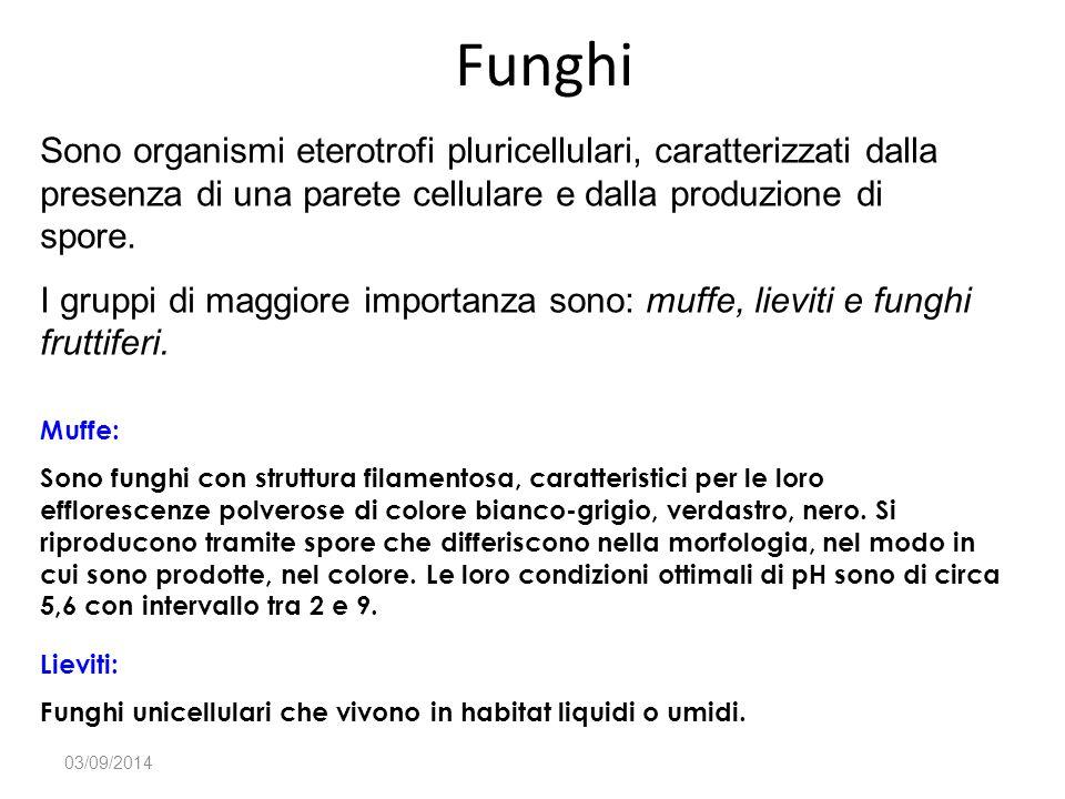 Funghi Sono organismi eterotrofi pluricellulari, caratterizzati dalla presenza di una parete cellulare e dalla produzione di spore.