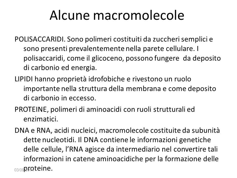 Alcune macromolecole