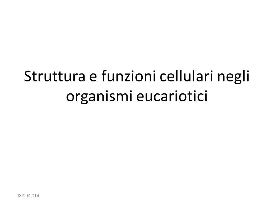 Struttura e funzioni cellulari negli organismi eucariotici