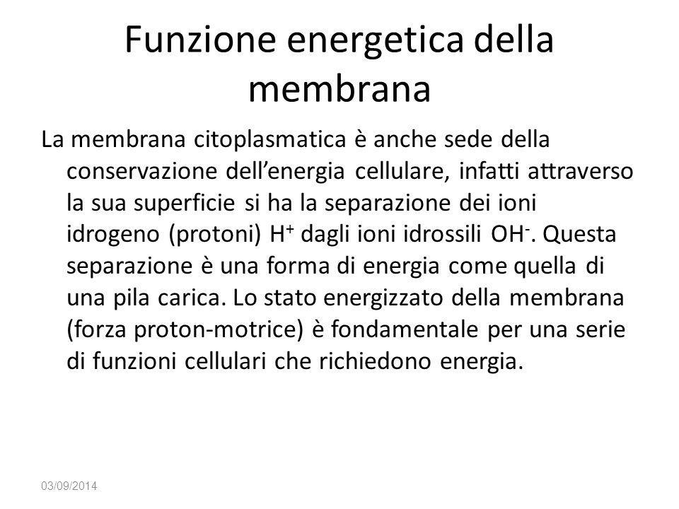 Funzione energetica della membrana