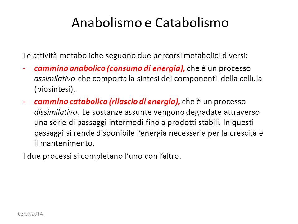 Anabolismo e Catabolismo