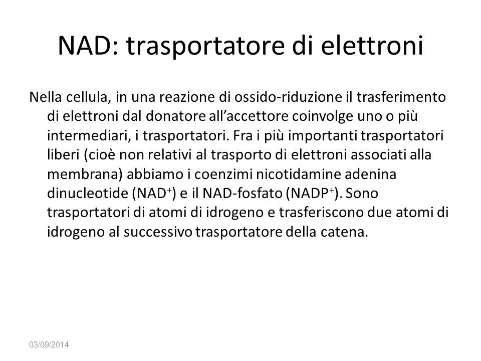 NAD: trasportatore di elettroni