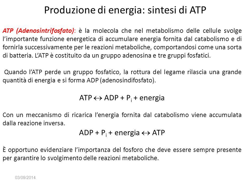 Produzione di energia: sintesi di ATP