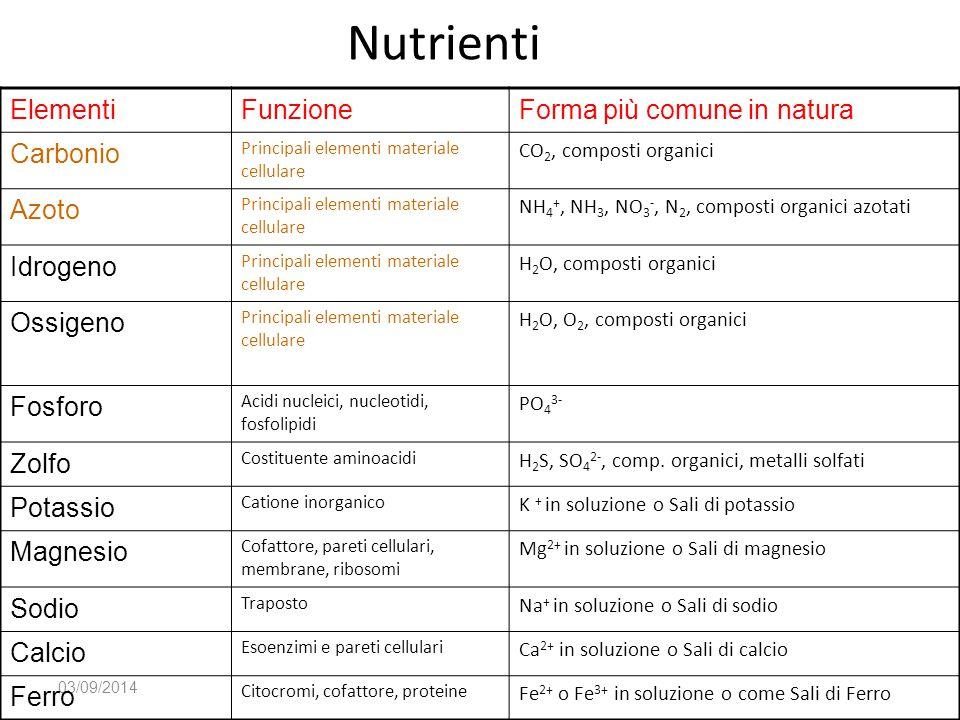 Nutrienti Elementi Funzione Forma più comune in natura Carbonio Azoto