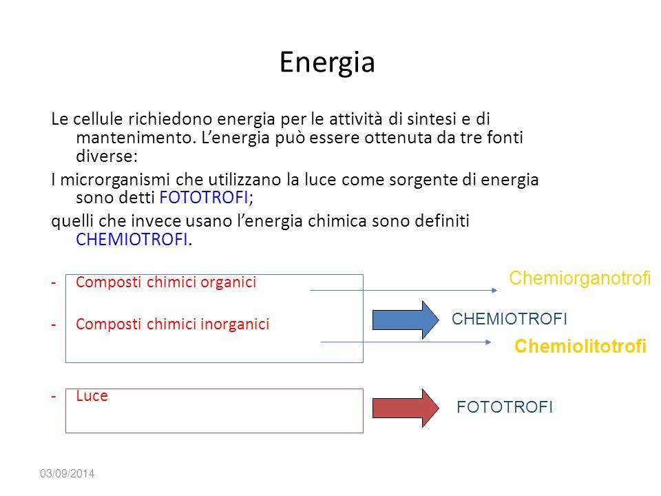 Energia Le cellule richiedono energia per le attività di sintesi e di mantenimento. L'energia può essere ottenuta da tre fonti diverse:
