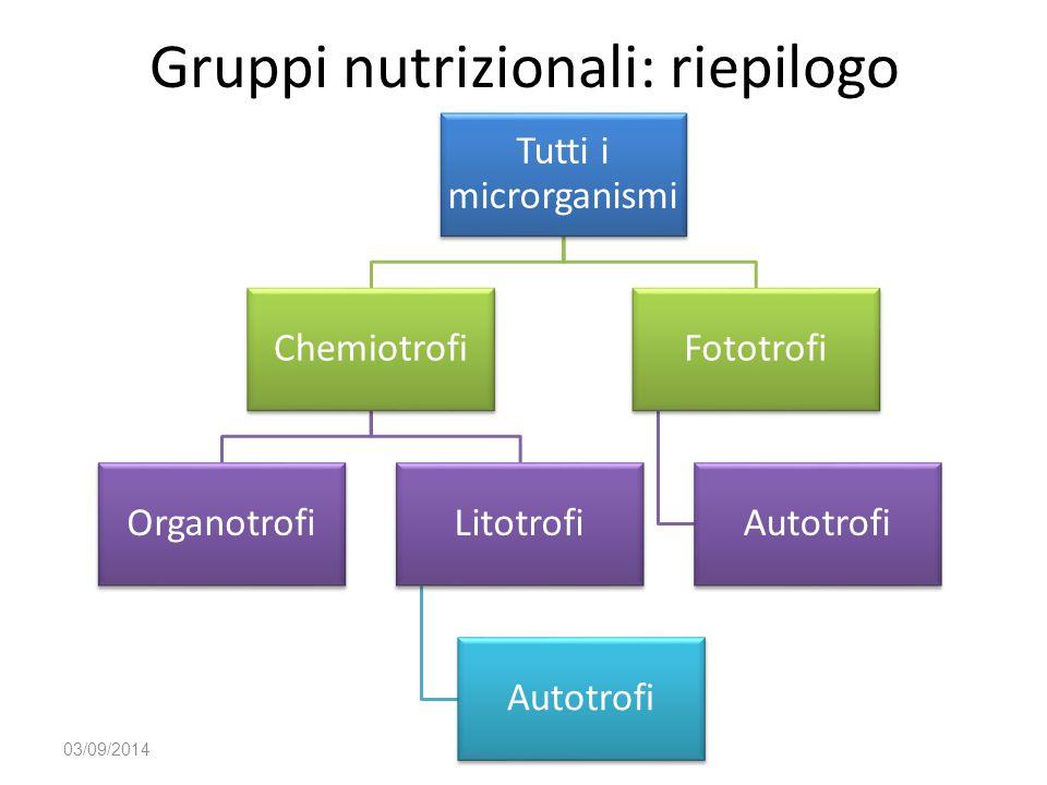 Gruppi nutrizionali: riepilogo