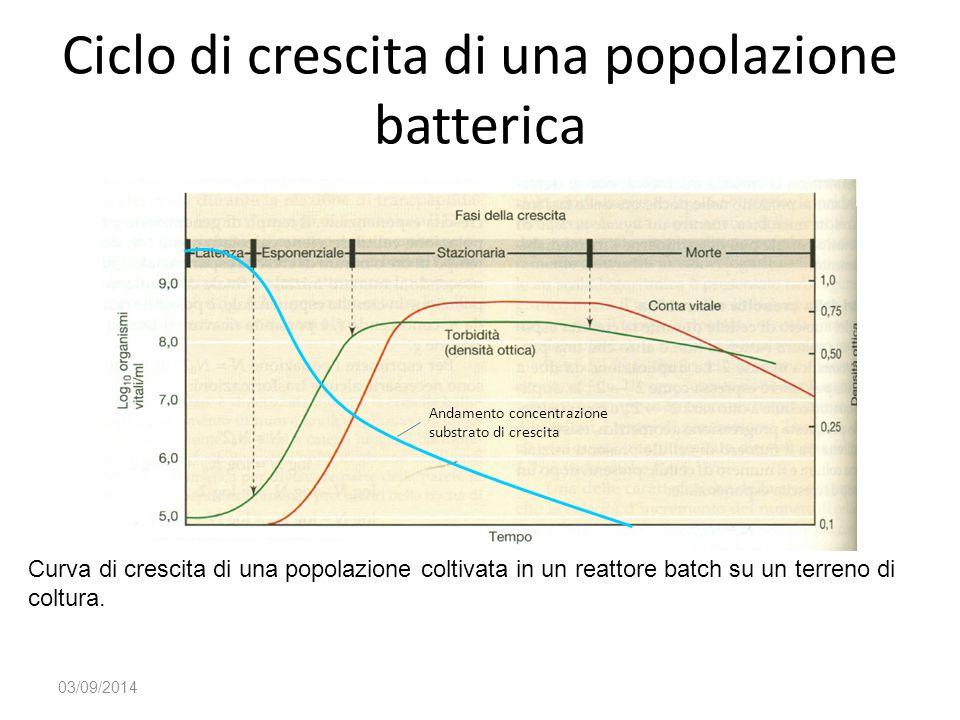 Ciclo di crescita di una popolazione batterica