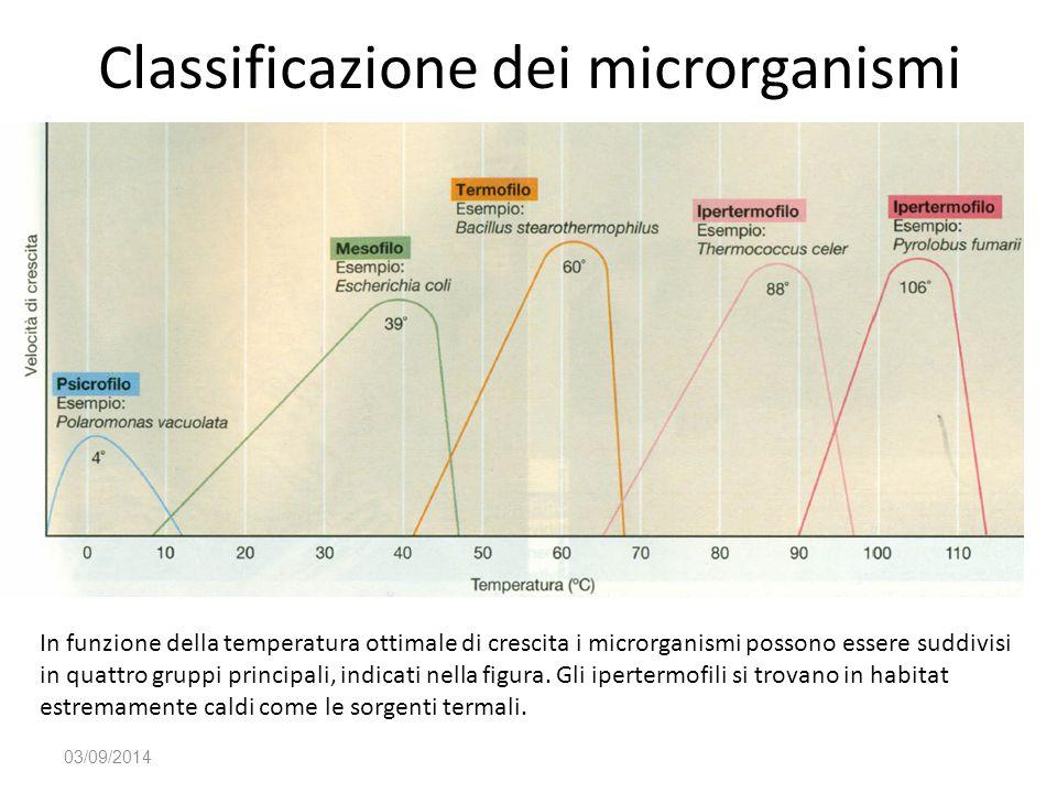 Classificazione dei microrganismi