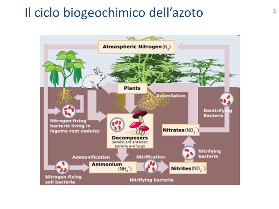 Il ciclo biogeochimico dell'azoto