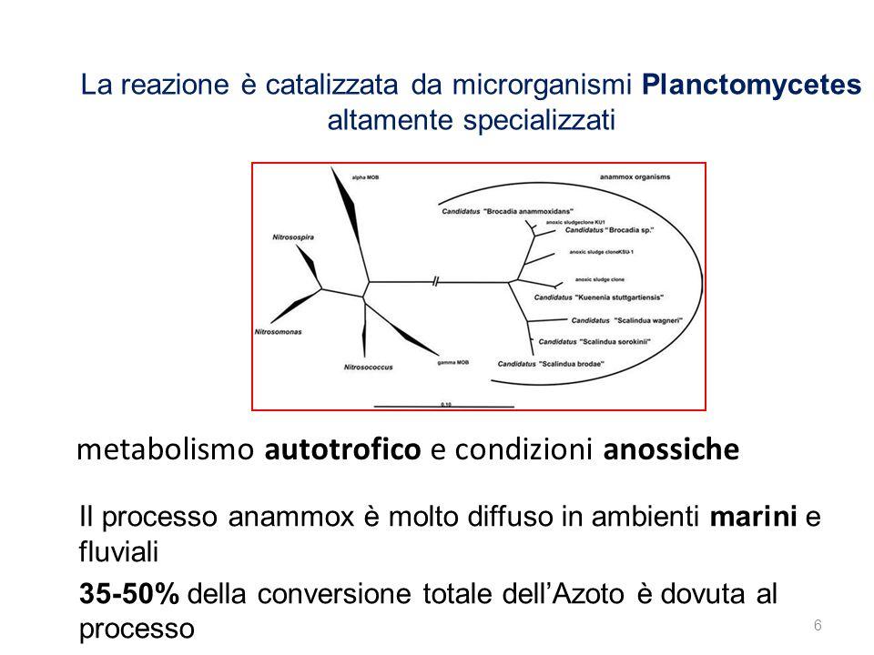 metabolismo autotrofico e condizioni anossiche