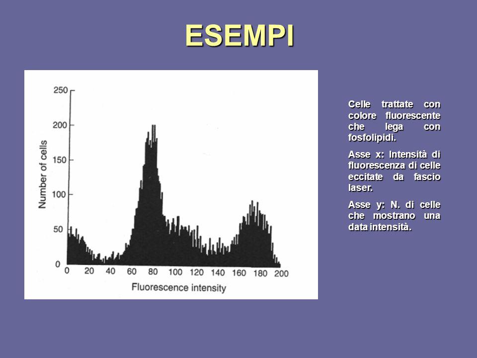 ESEMPI Celle trattate con colore fluorescente che lega con fosfolipidi. Asse x: Intensità di fluorescenza di celle eccitate da fascio laser.