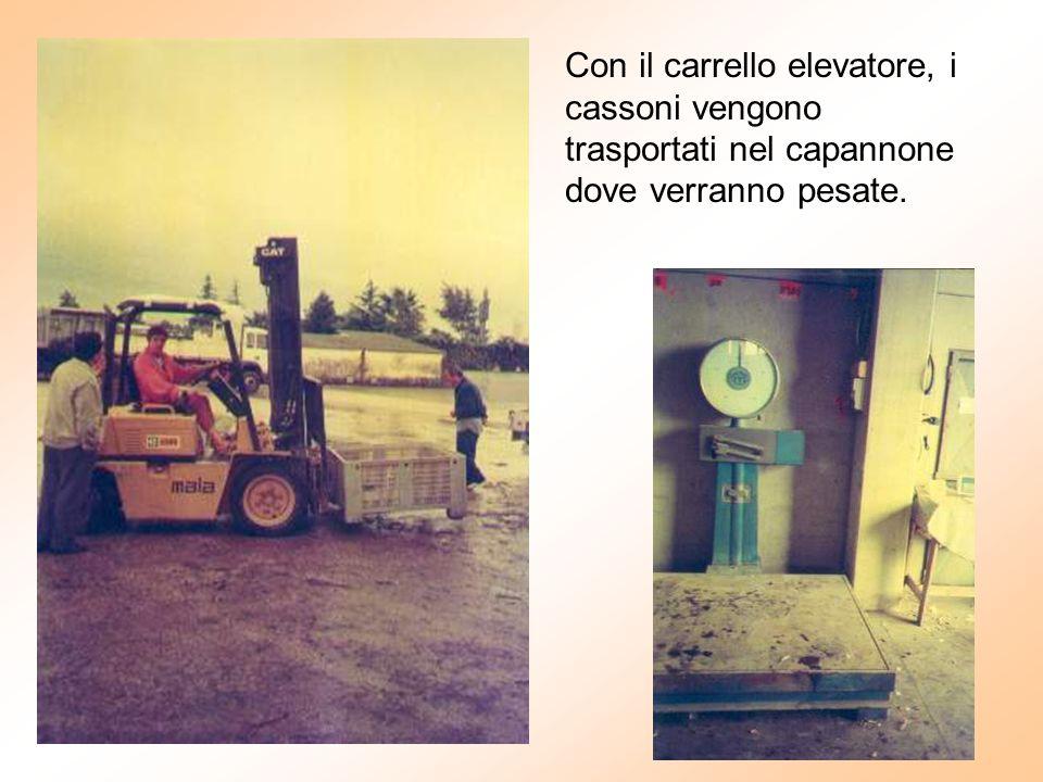 Con il carrello elevatore, i cassoni vengono trasportati nel capannone dove verranno pesate.