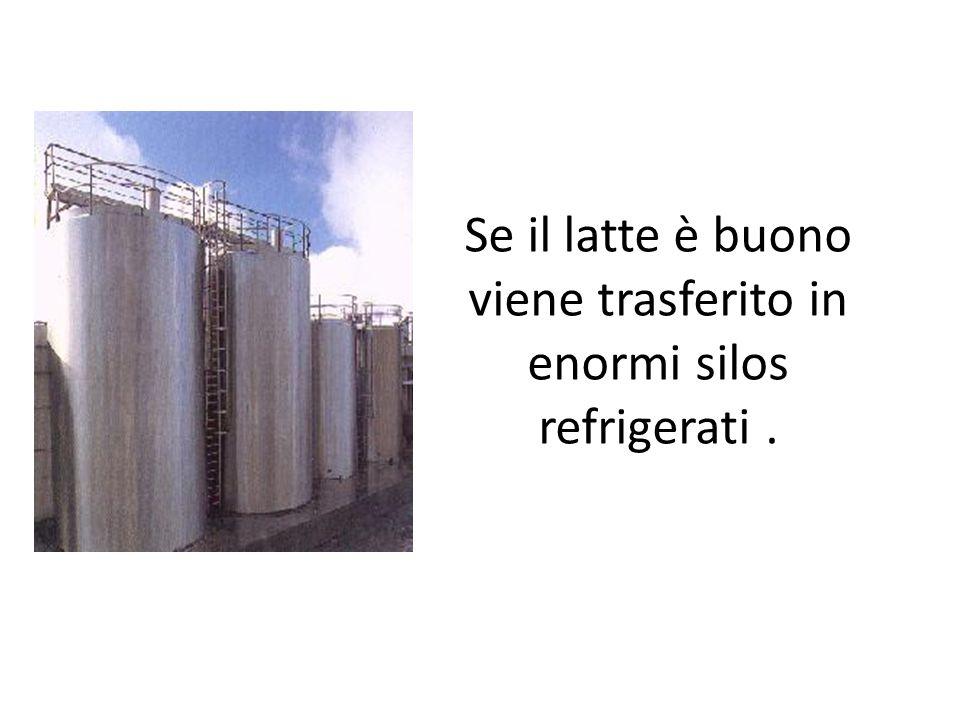 Se il latte è buono viene trasferito in enormi silos refrigerati .