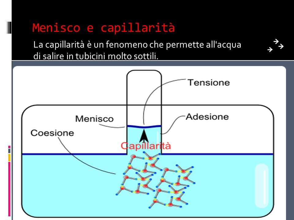 Menisco e capillarità La capillarità è un fenomeno che permette all acqua di salire in tubicini molto sottili.