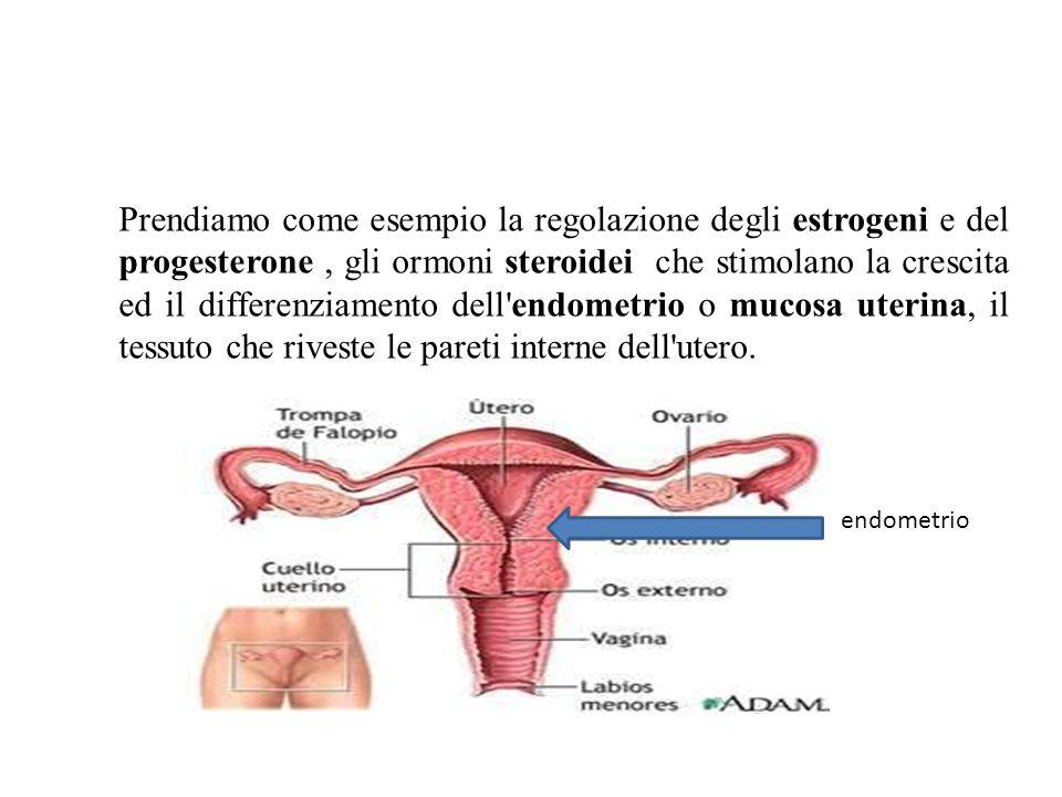Prendiamo come esempio la regolazione degli estrogeni e del progesterone , gli ormoni steroidei che stimolano la crescita ed il differenziamento dell endometrio o mucosa uterina, il tessuto che riveste le pareti interne dell utero.