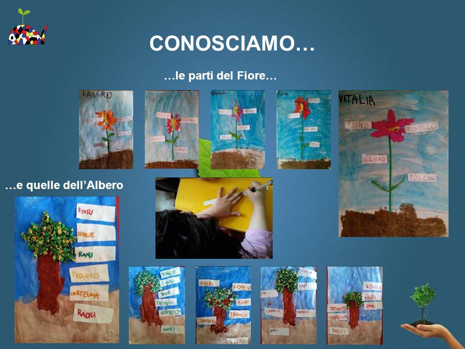 CONOSCIAMO… …le parti del Fiore… …e quelle dell'Albero