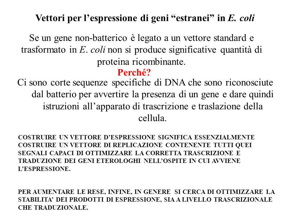 Vettori per l'espressione di geni estranei in E. coli