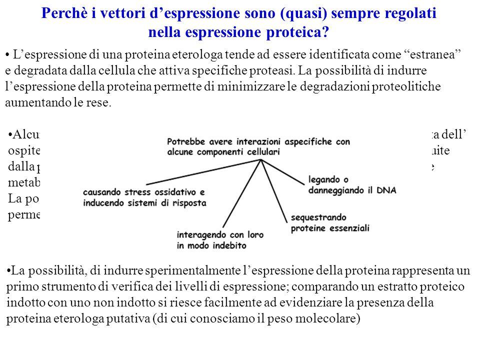 Perchè i vettori d'espressione sono (quasi) sempre regolati nella espressione proteica