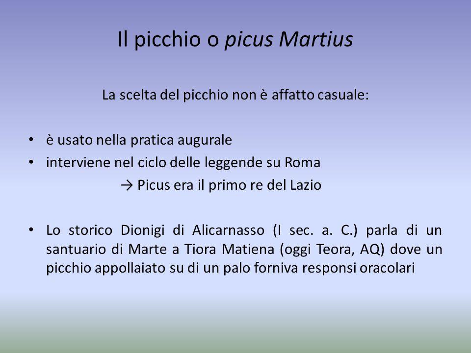 Il picchio o picus Martius