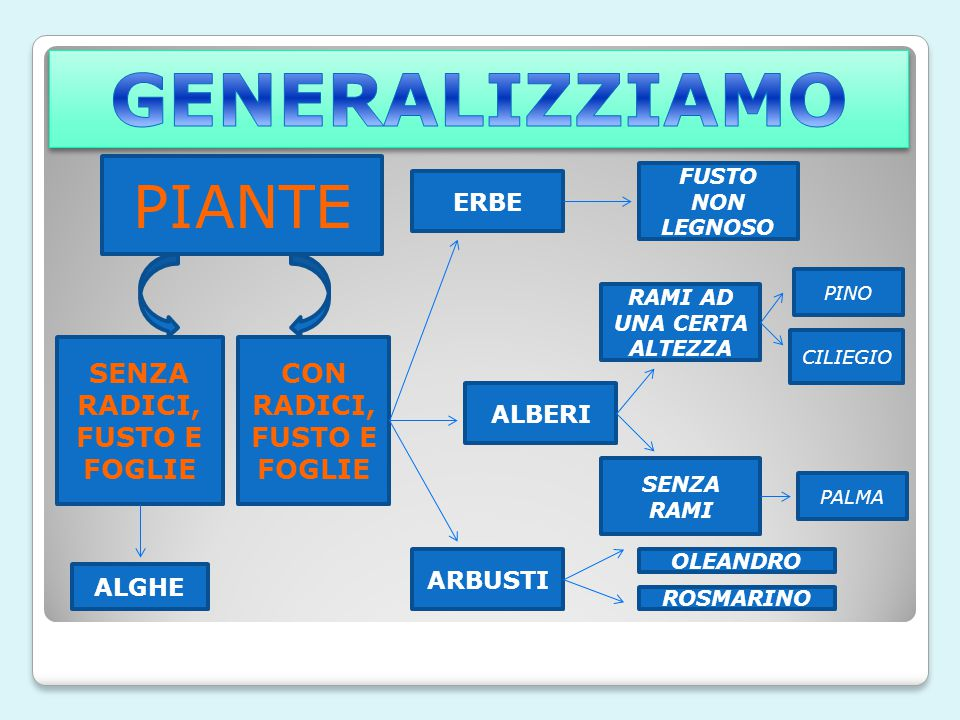 GENERALIZZIAMO PIANTE SENZA RADICI, FUSTO E FOGLIE