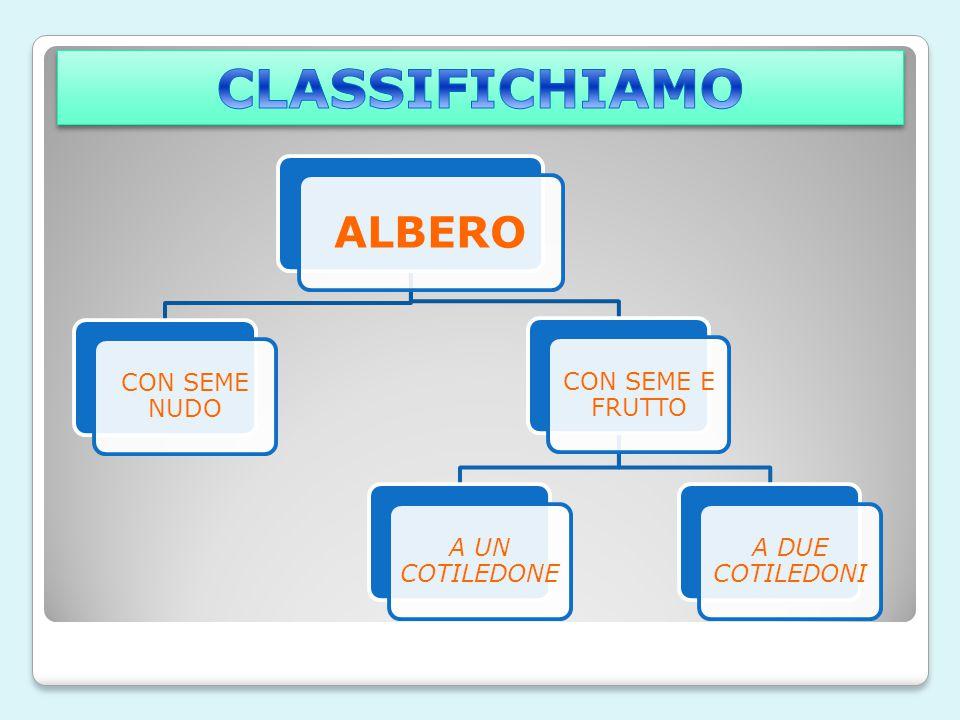 CLASSIFICHIAMO ALBERO CON SEME NUDO CON SEME E FRUTTO A UN COTILEDONE