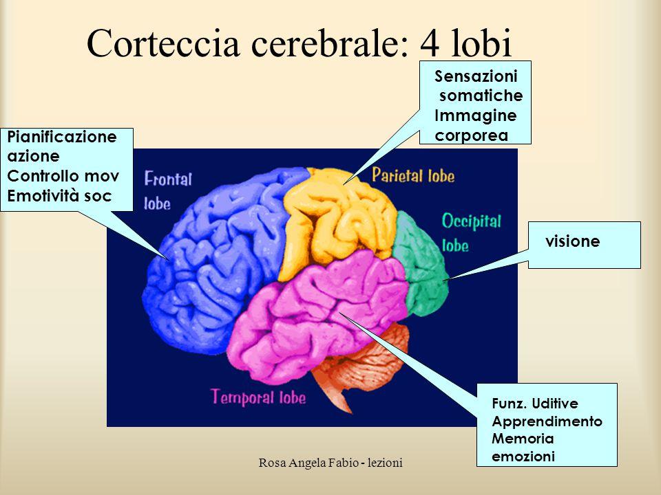 Corteccia cerebrale: 4 lobi