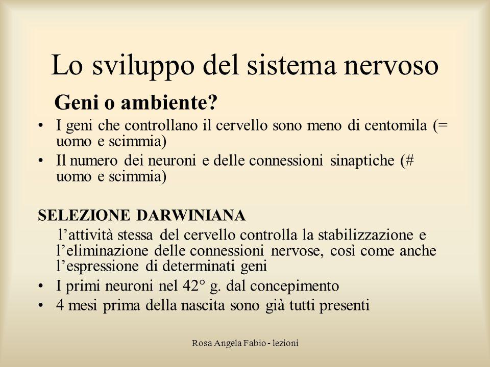 Lo sviluppo del sistema nervoso