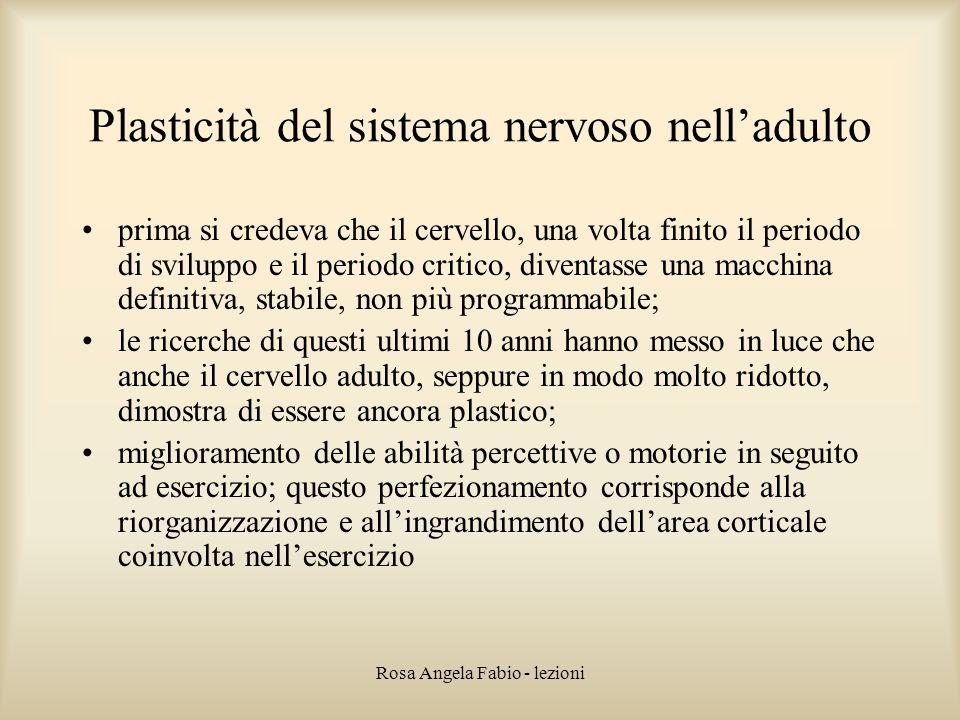 Plasticità del sistema nervoso nell'adulto