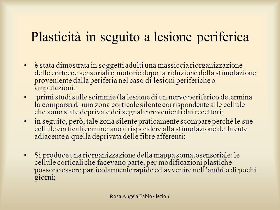 Plasticità in seguito a lesione periferica