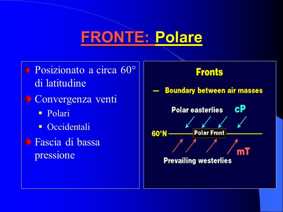 FRONTE: Polare Posizionato a circa 60° di latitudine Convergenza venti