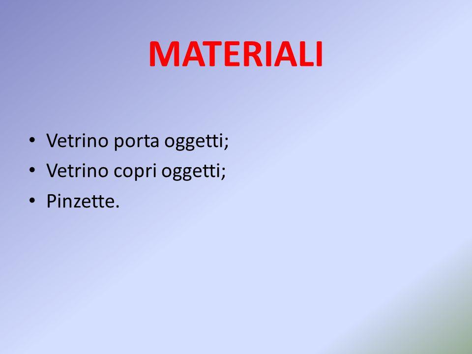 MATERIALI Vetrino porta oggetti; Vetrino copri oggetti; Pinzette.
