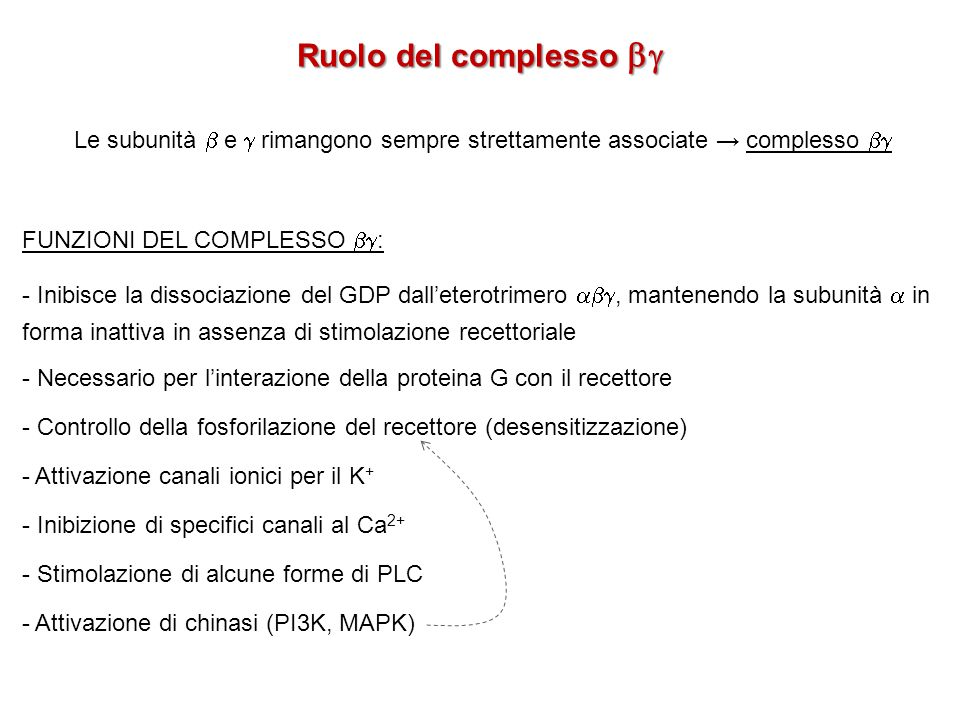 Ruolo del complesso  Le subunità  e  rimangono sempre strettamente associate → complesso  FUNZIONI DEL COMPLESSO :
