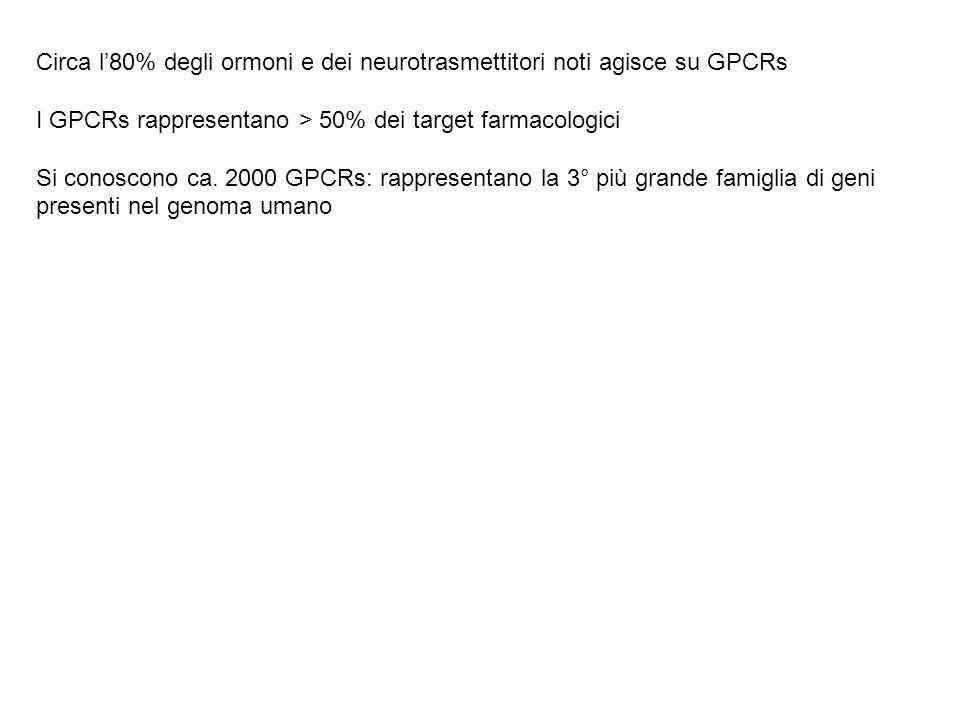 Circa l'80% degli ormoni e dei neurotrasmettitori noti agisce su GPCRs